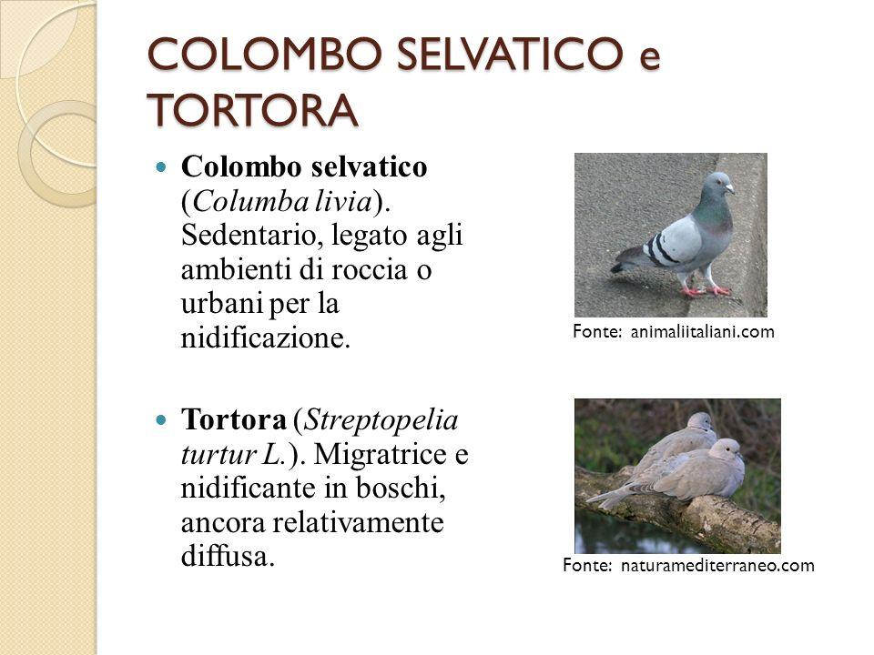 COLOMBO SELVATICO e TORTORA