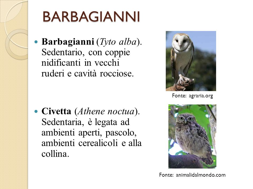 Fonte: animalidalmondo.com