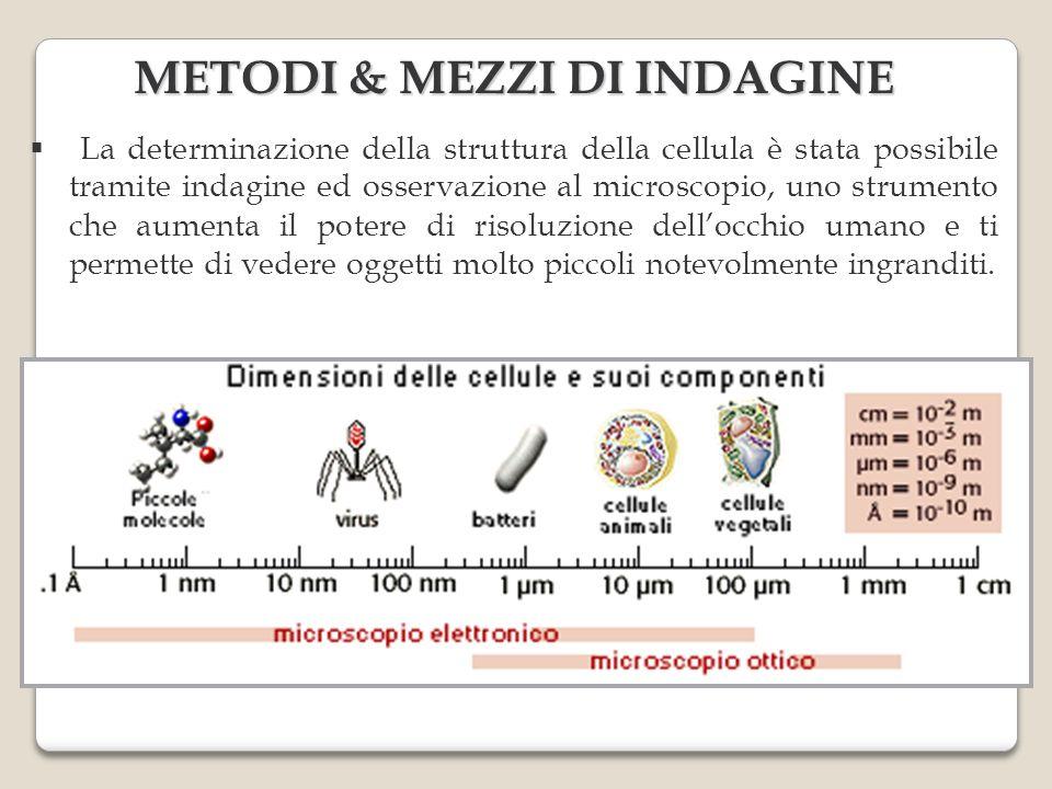 METODI & MEZZI DI INDAGINE