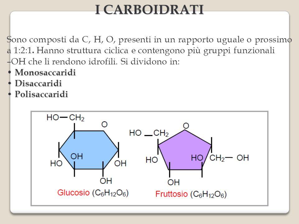 I CARBOIDRATI Sono composti da C, H, O, presenti in un rapporto uguale o prossimo a 1:2:1. Hanno struttura ciclica e contengono più gruppi funzionali.