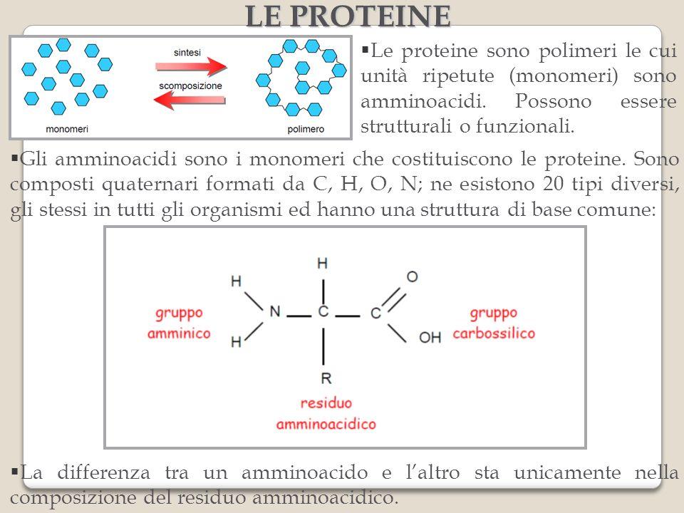 LE PROTEINE Le proteine sono polimeri le cui unità ripetute (monomeri) sono amminoacidi. Possono essere strutturali o funzionali.
