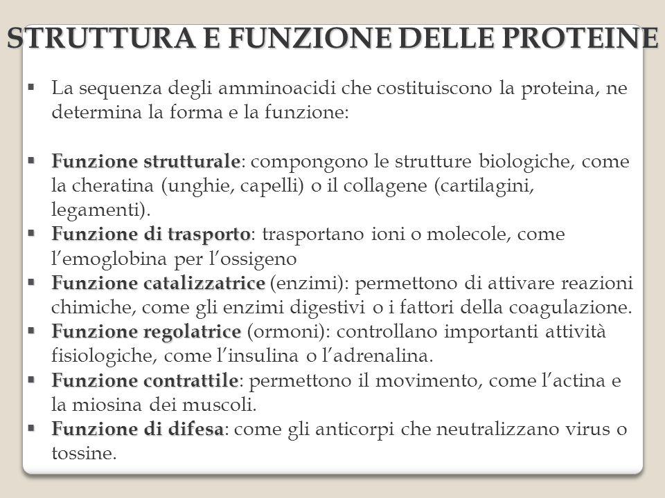 STRUTTURA E FUNZIONE DELLE PROTEINE