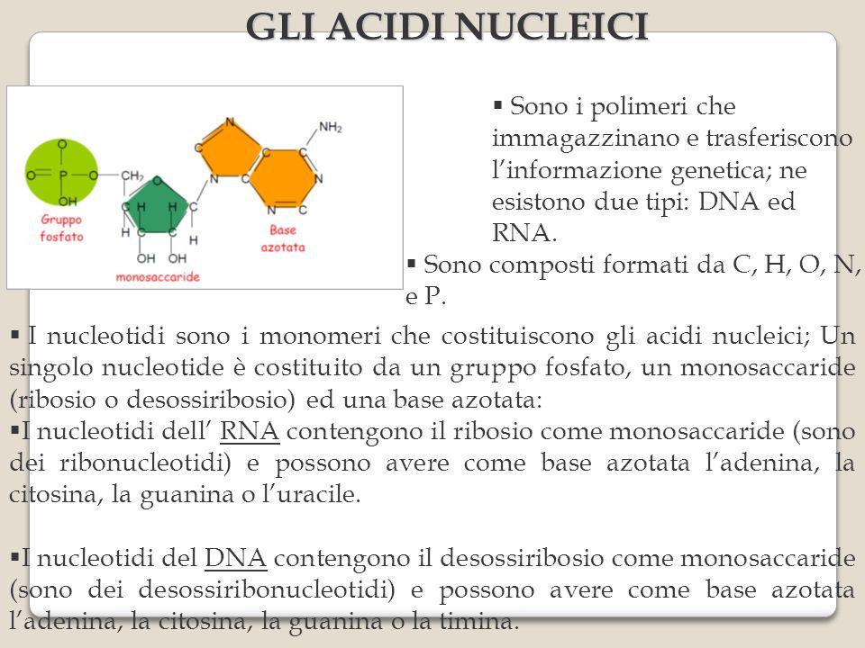 GLI ACIDI NUCLEICI Sono i polimeri che immagazzinano e trasferiscono l'informazione genetica; ne esistono due tipi: DNA ed RNA.