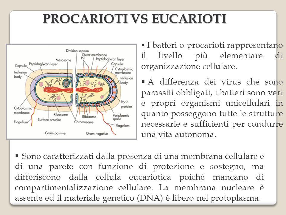 PROCARIOTI VS EUCARIOTI