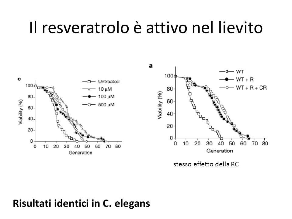 Il resveratrolo è attivo nel lievito