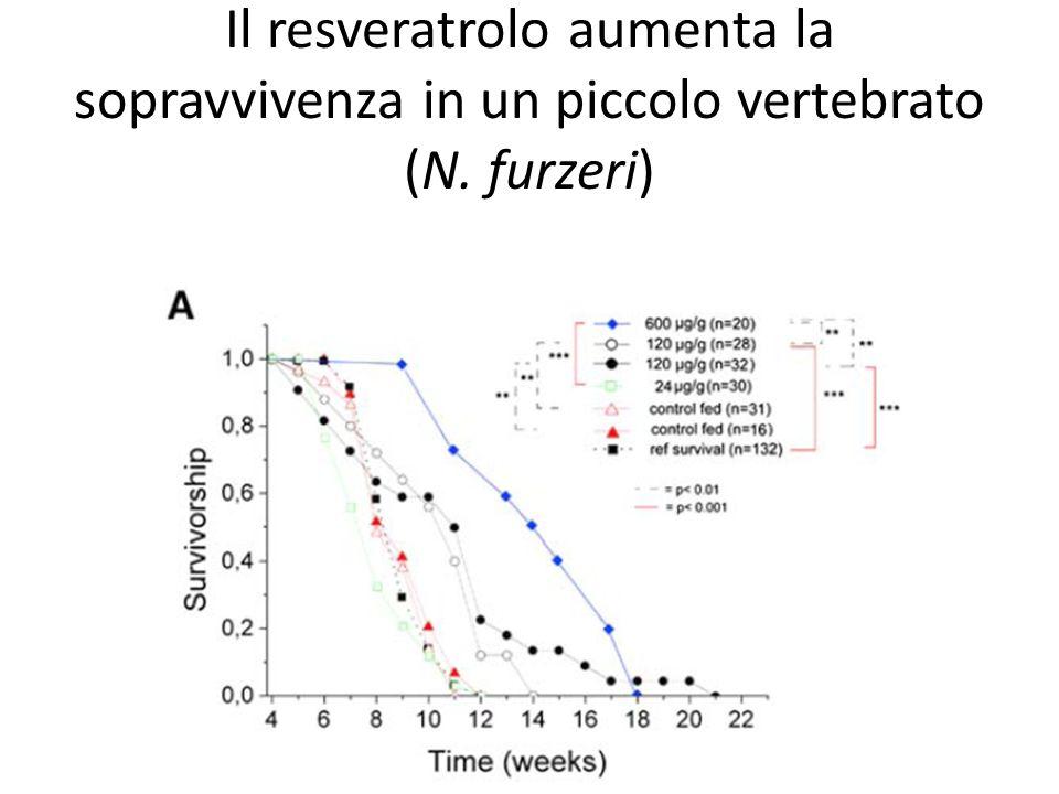 Il resveratrolo aumenta la sopravvivenza in un piccolo vertebrato (N