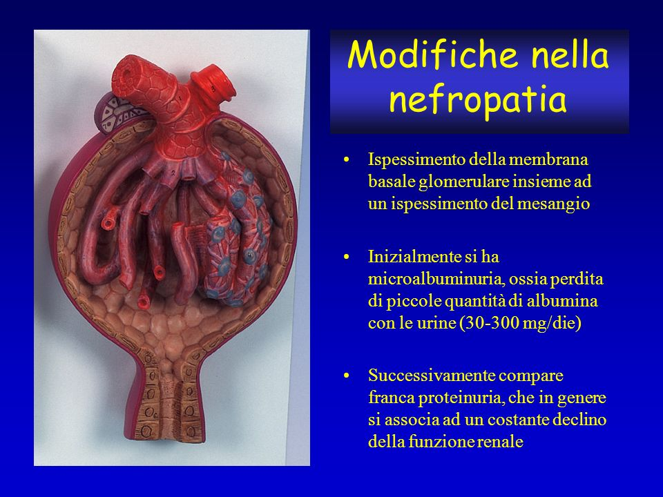 Modifiche nella nefropatia