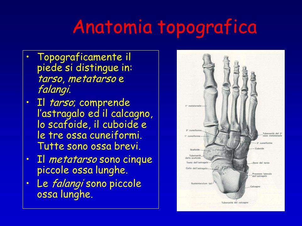 Anatomia topograficaTopograficamente il piede si distingue in: tarso, metatarso e falangi.