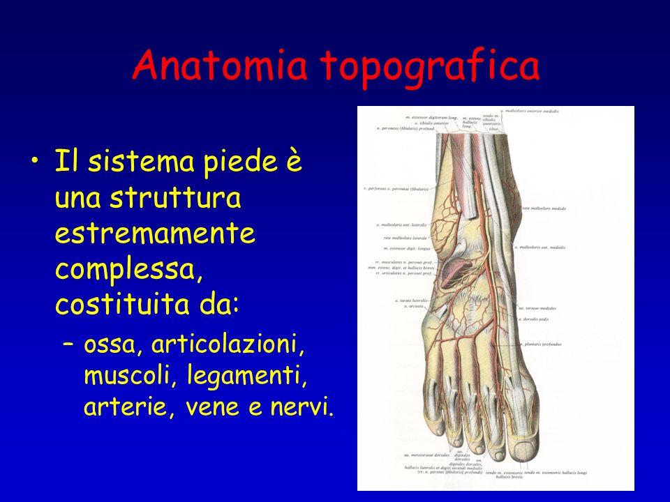 Anatomia topografica Il sistema piede è una struttura estremamente complessa, costituita da: