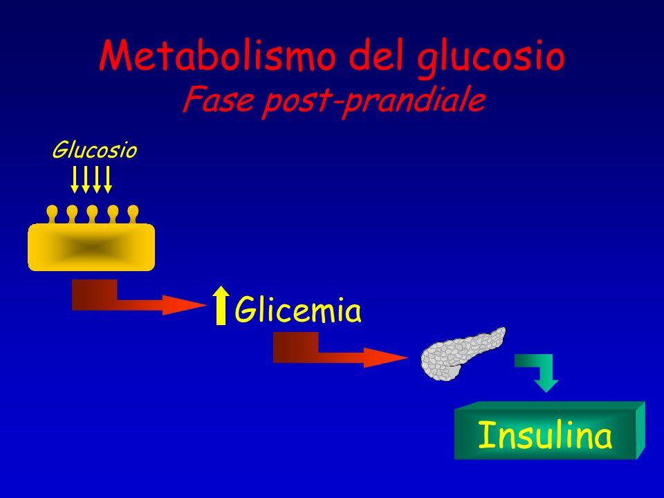 Metabolismo del glucosio Fase post-prandiale