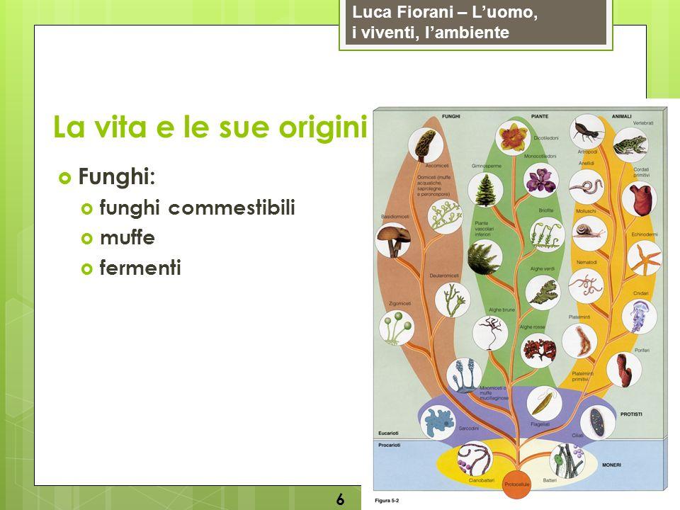 La vita e le sue origini Funghi: funghi commestibili muffe fermenti 6