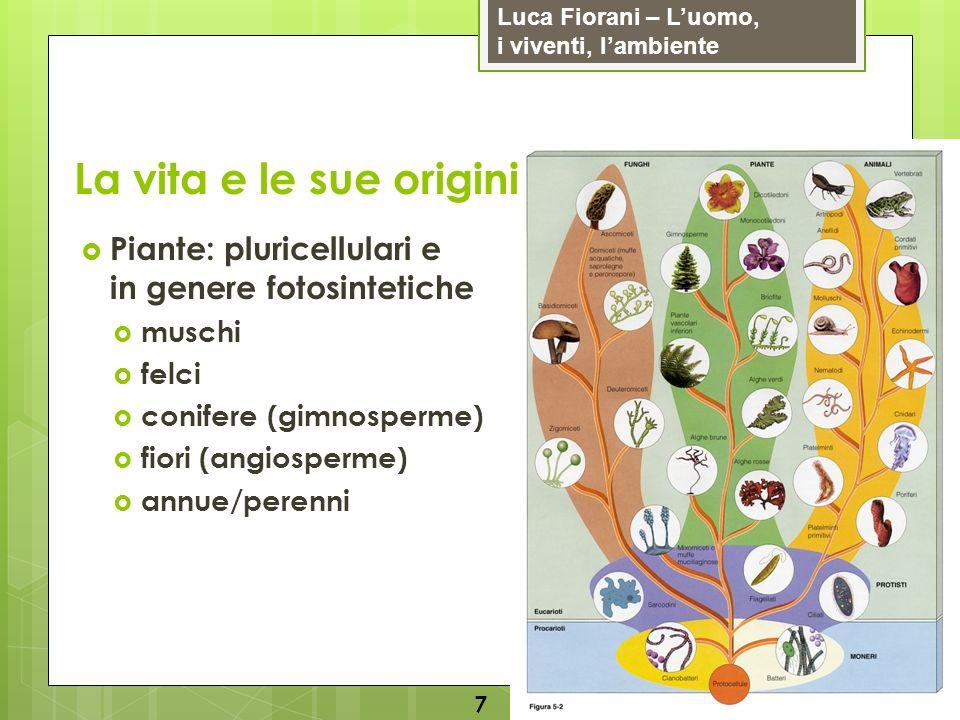 La vita e le sue origini Piante: pluricellulari e in genere fotosintetiche. muschi. felci. conifere (gimnosperme)