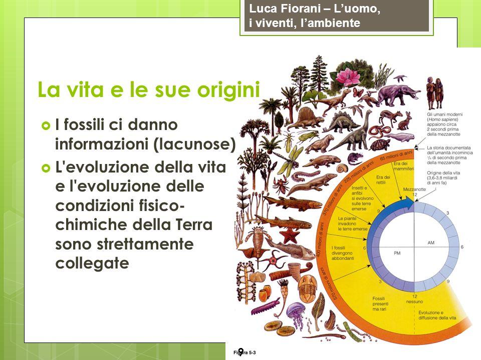 La vita e le sue origini I fossili ci danno informazioni (lacunose)
