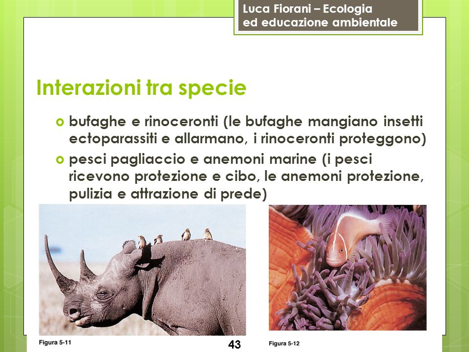 Interazioni tra specie