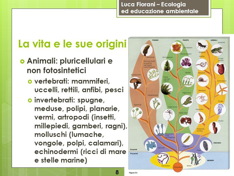 La vita e le sue origini Animali: pluricellulari e non fotosintetici