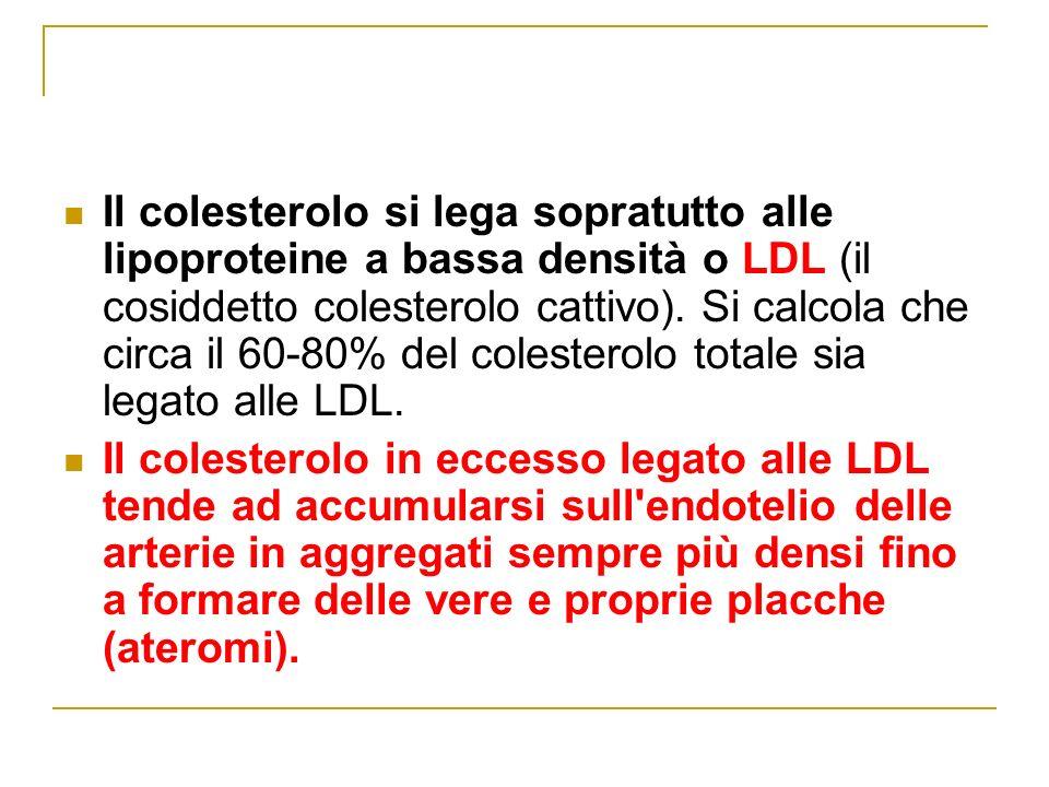 Il colesterolo si lega sopratutto alle lipoproteine a bassa densità o LDL (il cosiddetto colesterolo cattivo). Si calcola che circa il 60-80% del colesterolo totale sia legato alle LDL.