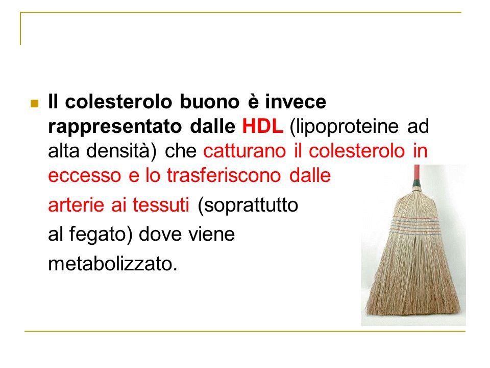 Il colesterolo buono è invece rappresentato dalle HDL (lipoproteine ad alta densità) che catturano il colesterolo in eccesso e lo trasferiscono dalle