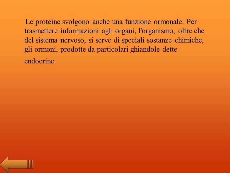 Le proteine svolgono anche una funzione ormonale