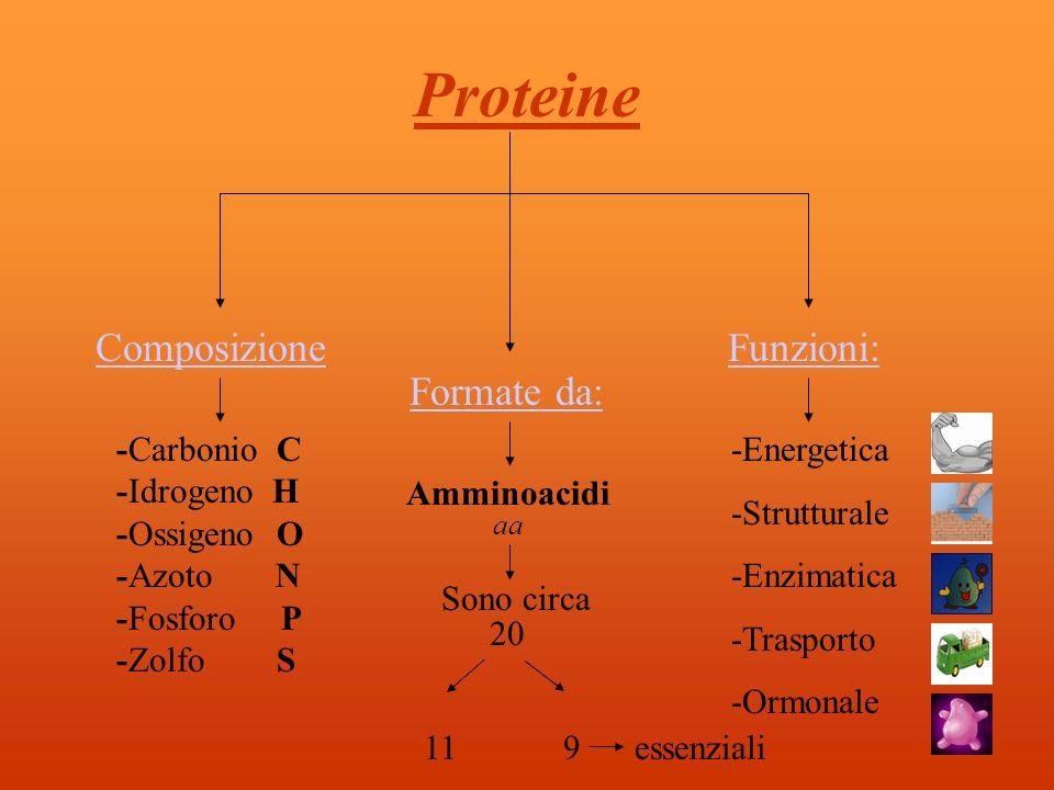 Proteine Composizione Funzioni: Formate da: -Carbonio C -Idrogeno H