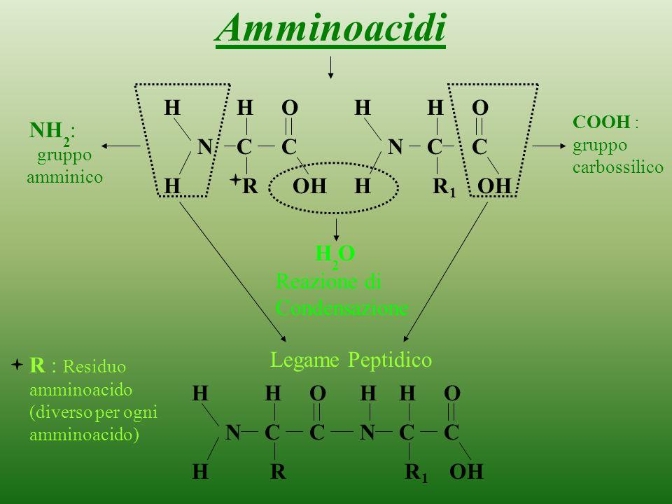 Amminoacidi H H O H H O : gruppo amminico NH N C C N C C H R OH H R OH
