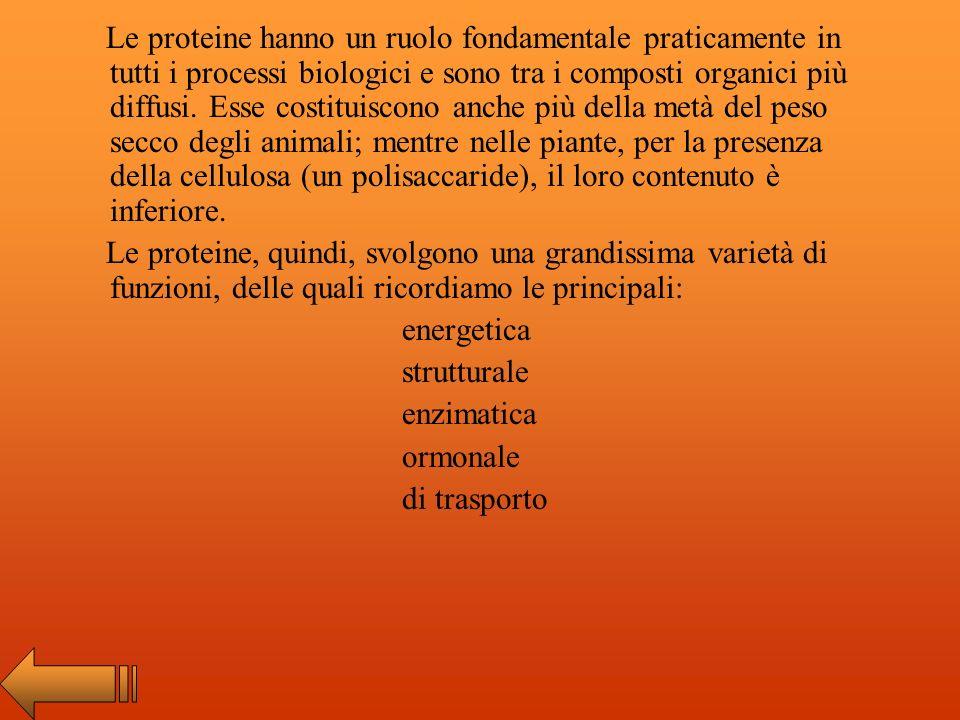Le proteine hanno un ruolo fondamentale praticamente in tutti i processi biologici e sono tra i composti organici più diffusi. Esse costituiscono anche più della metà del peso secco degli animali; mentre nelle piante, per la presenza della cellulosa (un polisaccaride), il loro contenuto è inferiore.