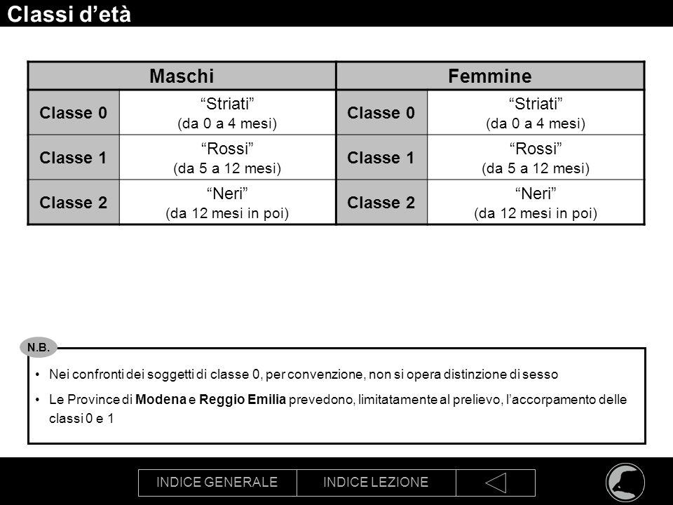 Classi d'età Maschi Femmine Striati Classe 0 Rossi Classe 1 Neri