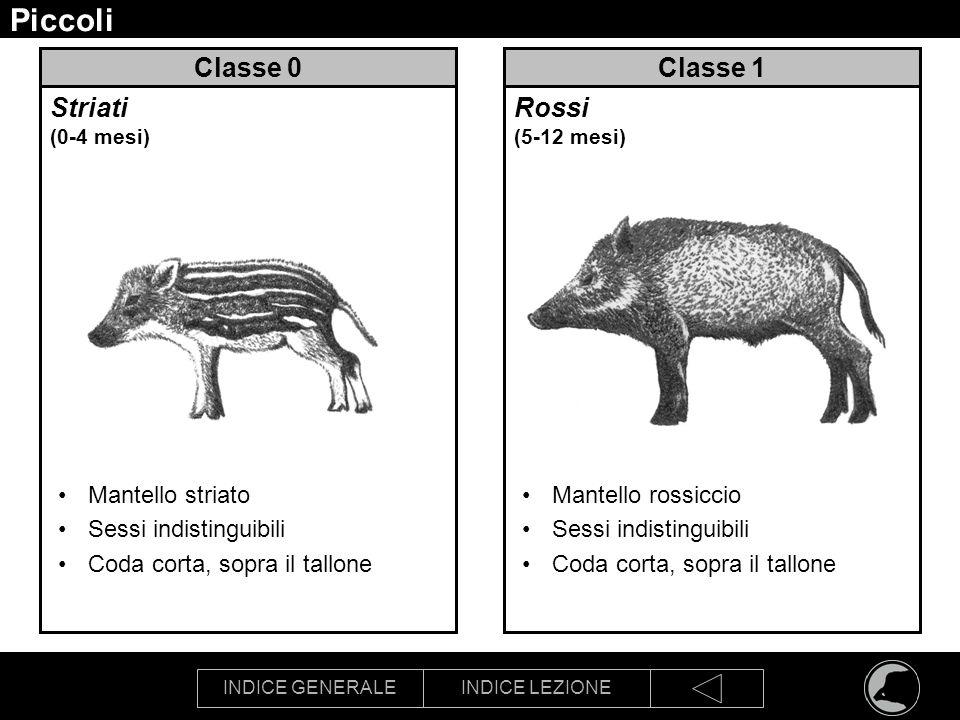 Piccoli Classe 0 Classe 1 Striati (0-4 mesi) Rossi (5-12 mesi)