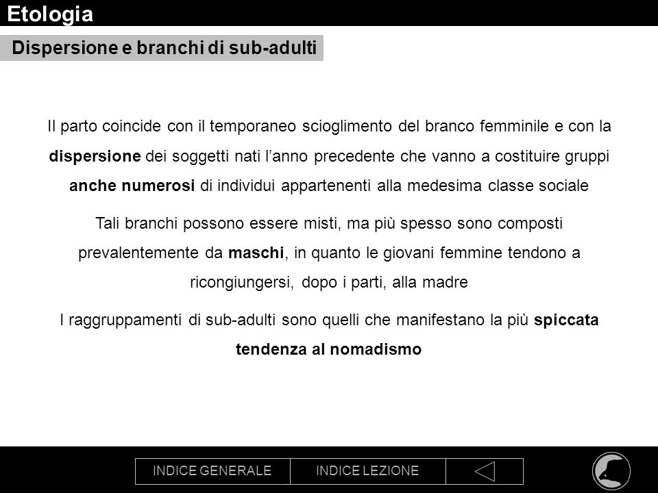 Etologia Dispersione e branchi di sub-adulti
