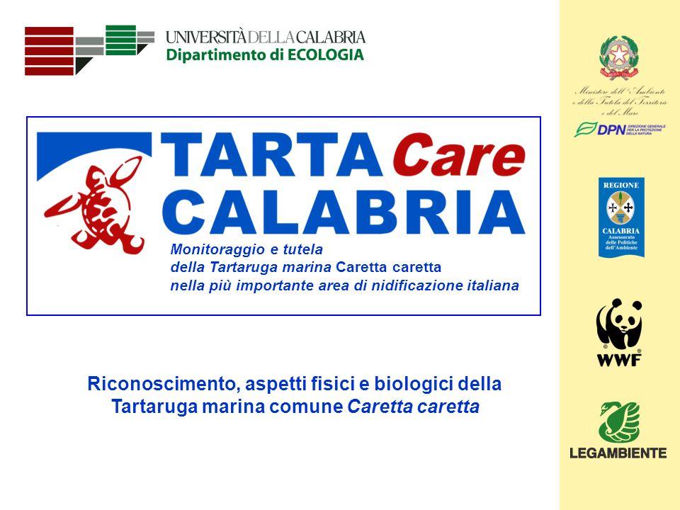 Monitoraggio e tutela della Tartaruga marina Caretta caretta. nella più importante area di nidificazione italiana.