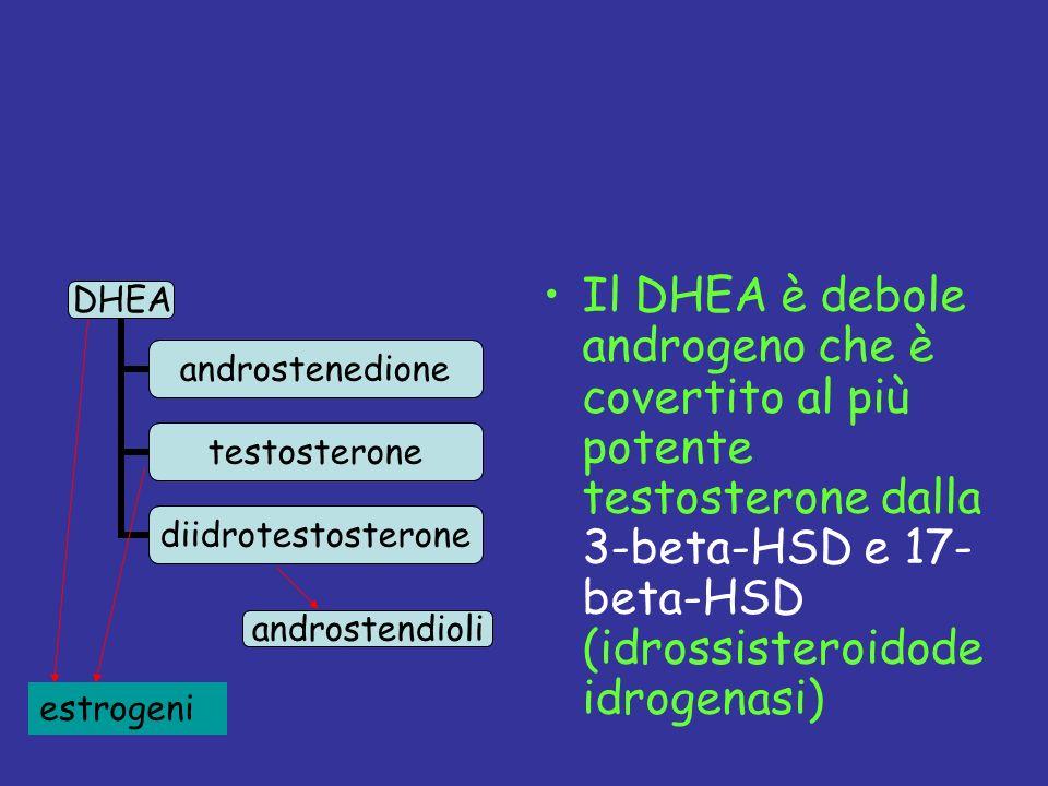 Il DHEA è debole androgeno che è covertito al più potente testosterone dalla 3-beta-HSD e 17- beta-HSD (idrossisteroidodeidrogenasi)