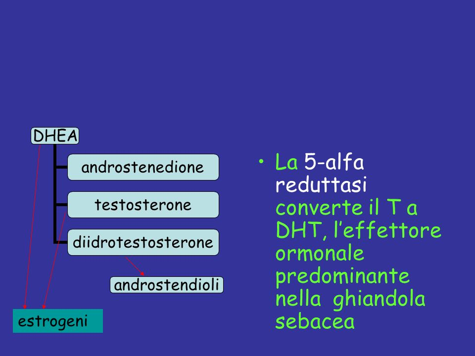 La 5-alfa reduttasi converte il T a DHT, l'effettore ormonale predominante nella ghiandola sebacea
