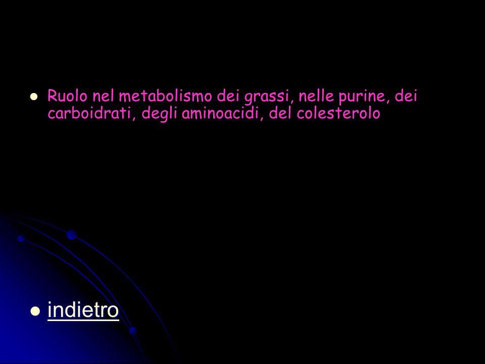 Ruolo nel metabolismo dei grassi, nelle purine, dei carboidrati, degli aminoacidi, del colesterolo