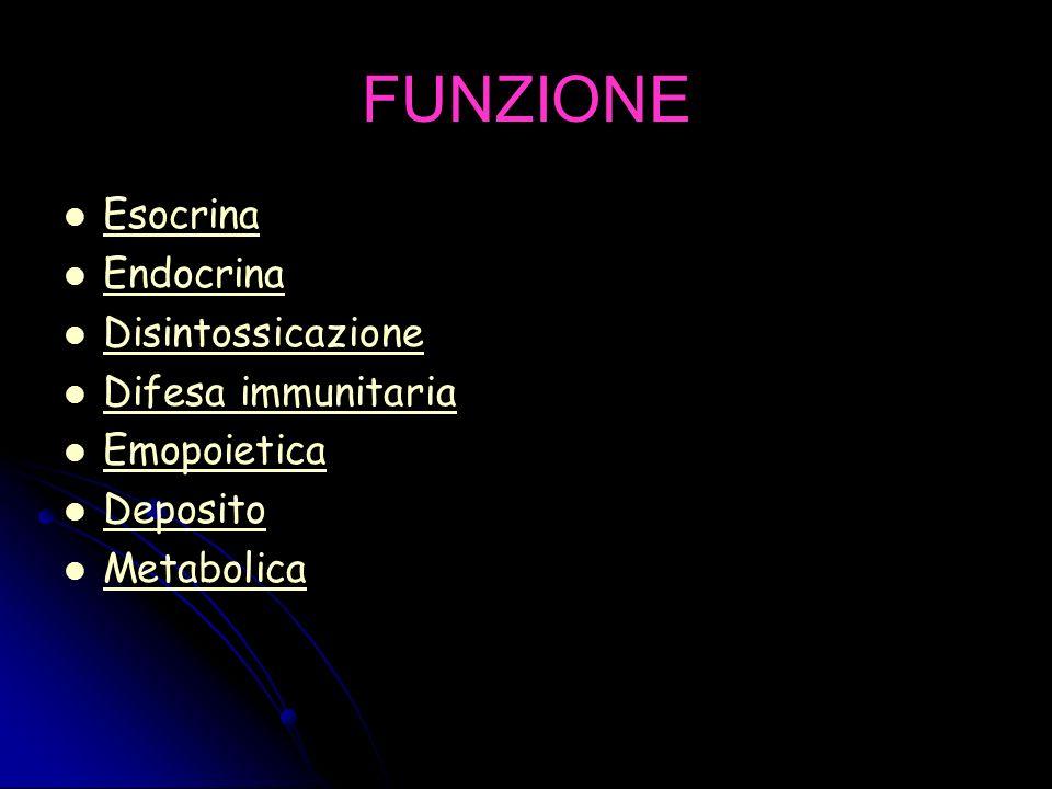FUNZIONE Esocrina Endocrina Disintossicazione Difesa immunitaria