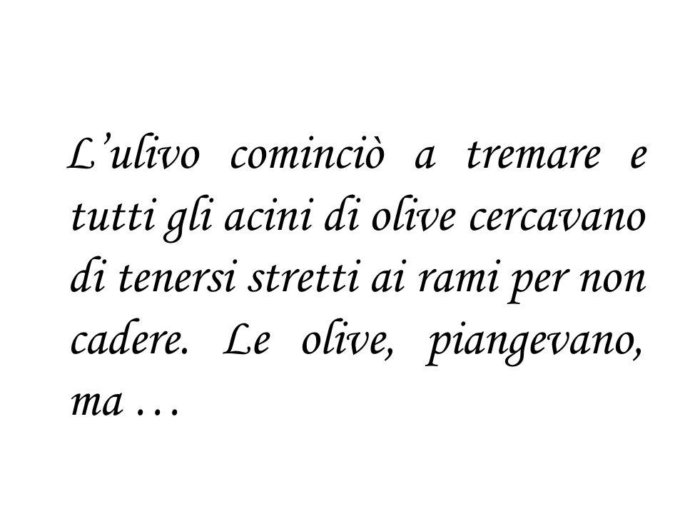 L'ulivo cominciò a tremare e tutti gli acini di olive cercavano di tenersi stretti ai rami per non cadere.