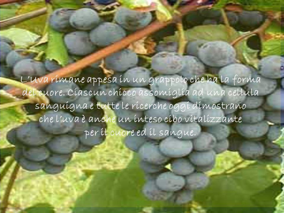L'Uva rimane appesa in un grappolo che ha la forma