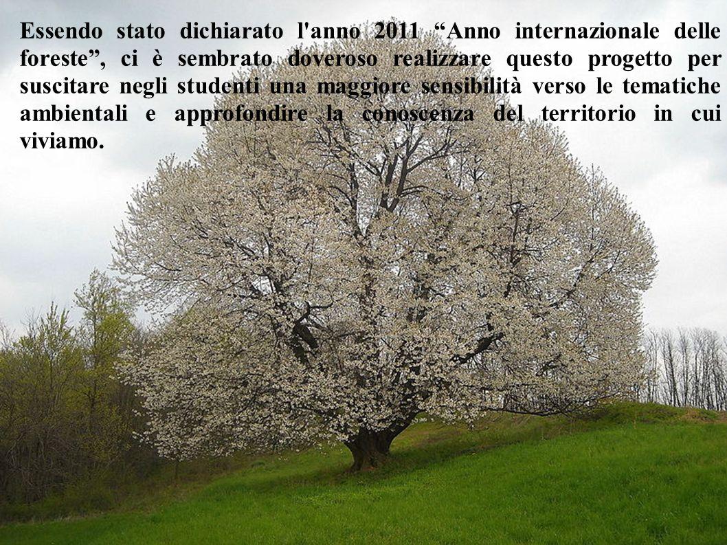 Essendo stato dichiarato l anno 2011 Anno internazionale delle foreste , ci è sembrato doveroso realizzare questo progetto per suscitare negli studenti una maggiore sensibilità verso le tematiche ambientali e approfondire la conoscenza del territorio in cui viviamo.