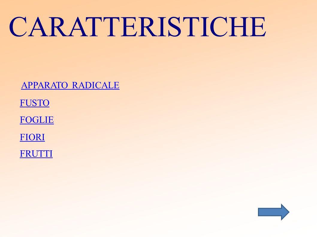 CARATTERISTICHE APPARATO RADICALE FUSTO FOGLIE FIORI FRUTTI