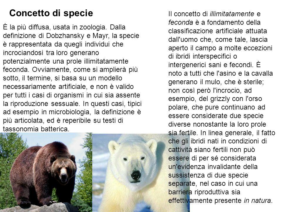 Concetto di specie