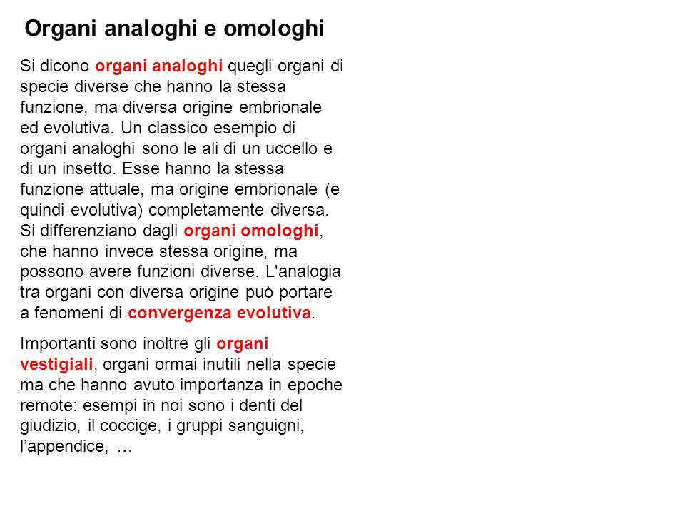 Organi analoghi e omologhi