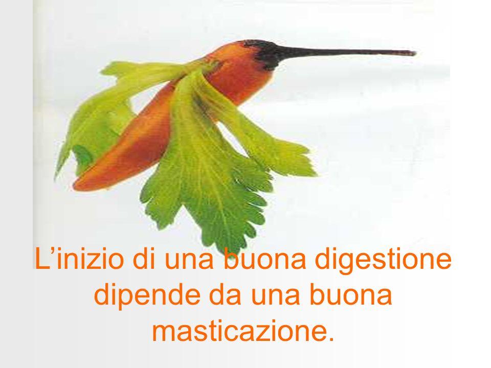 L'inizio di una buona digestione dipende da una buona masticazione.