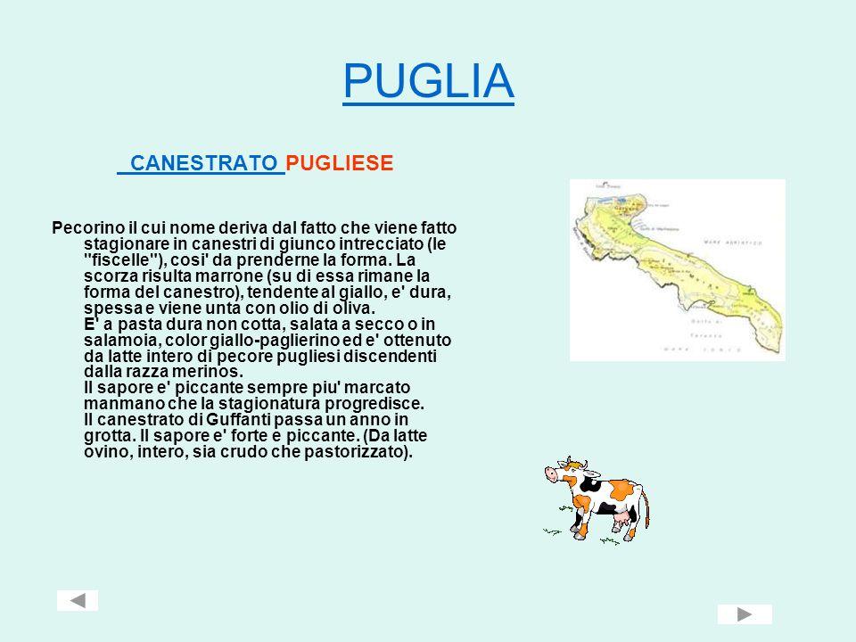 PUGLIA CANESTRATO PUGLIESE