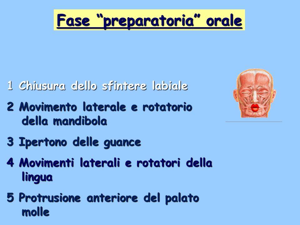 Fase preparatoria orale