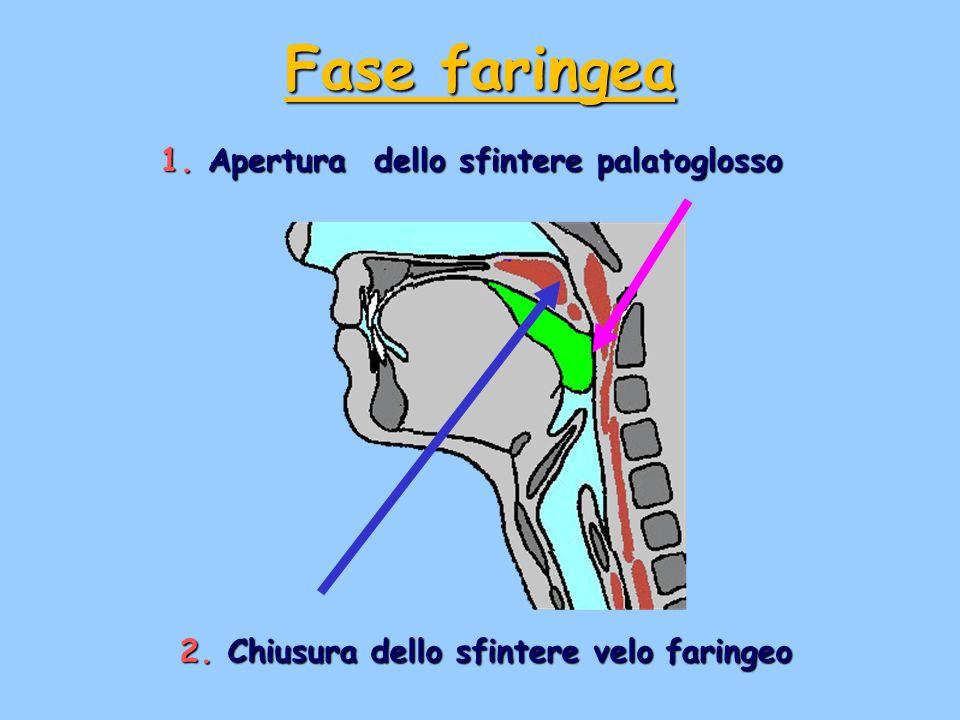 Fase faringea Apertura dello sfintere palatoglosso