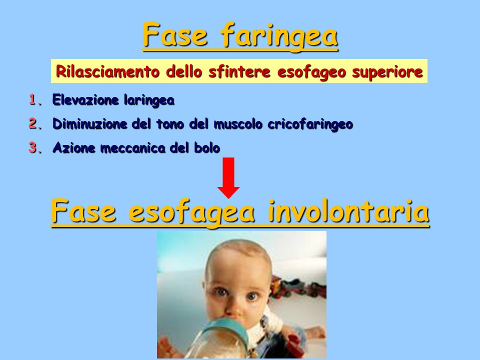 Fase esofagea involontaria