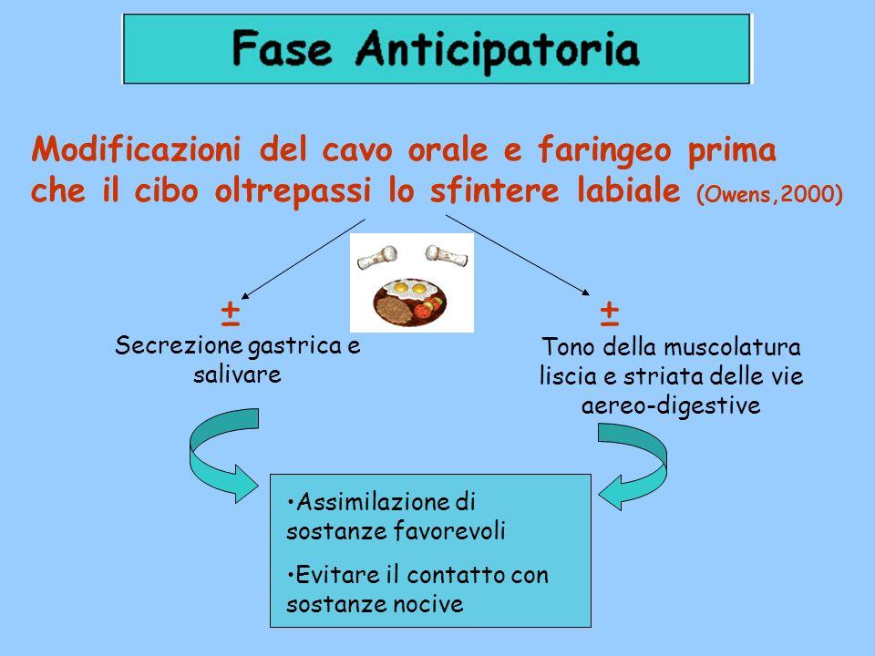 Modificazioni del cavo orale e faringeo prima che il cibo oltrepassi lo sfintere labiale (Owens,2000)