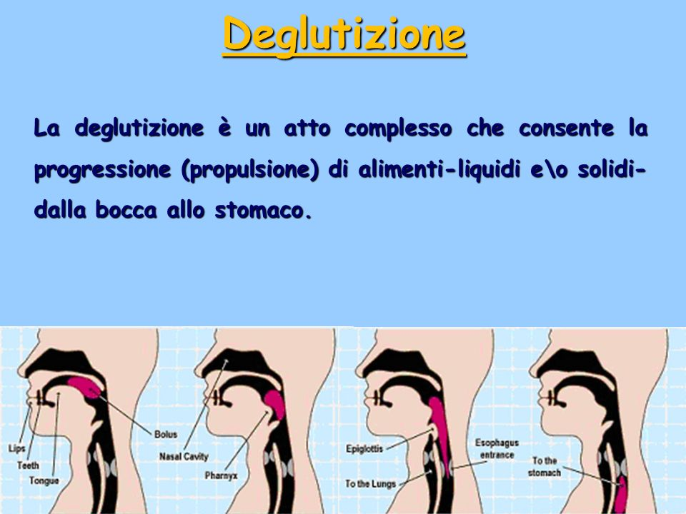 Deglutizione La deglutizione è un atto complesso che consente la progressione (propulsione) di alimenti-liquidi e\o solidi-dalla bocca allo stomaco.