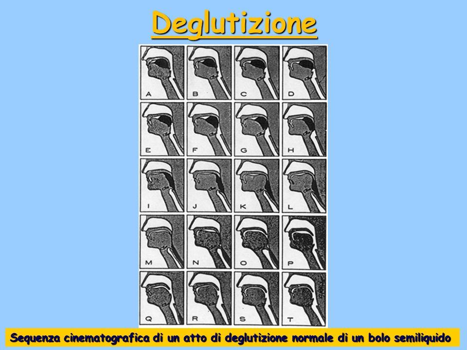 Deglutizione Sequenza cinematografica di un atto di deglutizione normale di un bolo semiliquido
