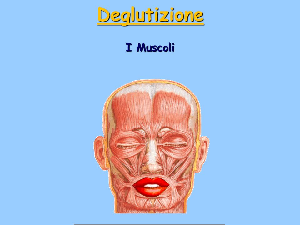 Deglutizione I Muscoli