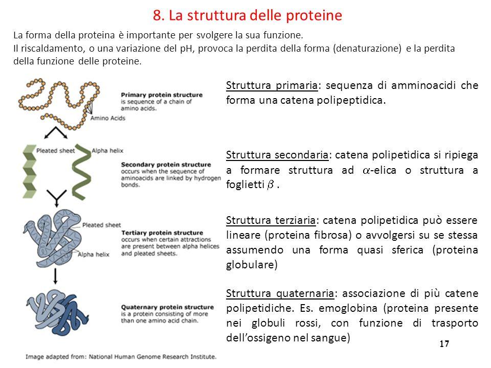 8. La struttura delle proteine