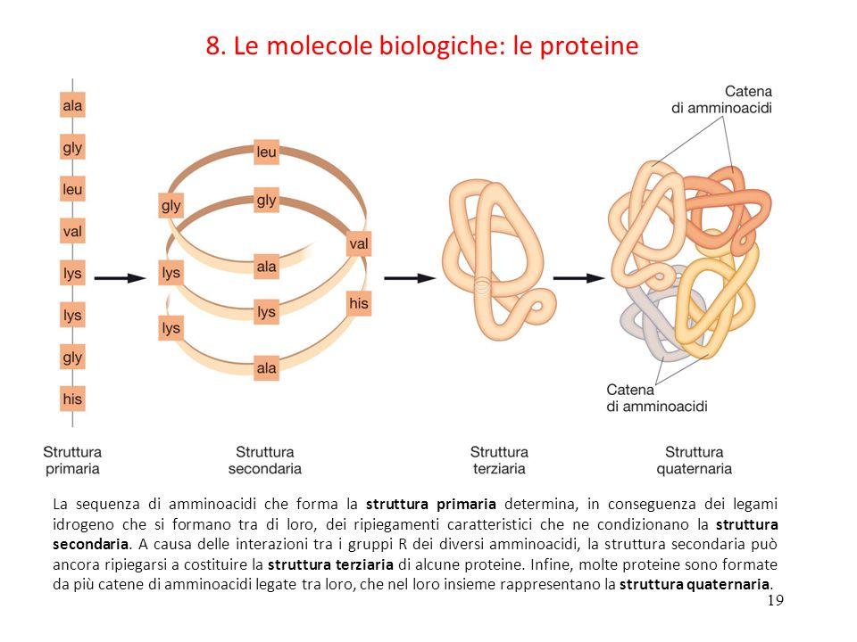 8. Le molecole biologiche: le proteine